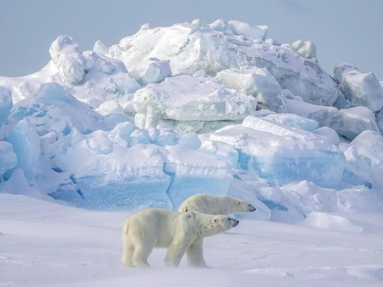 Man shot polar bear and left its body outside his home for five months