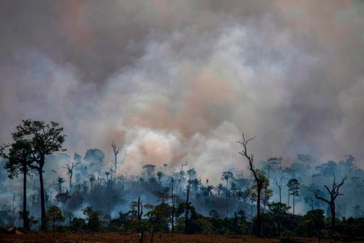 Ability of re-grown Amazon forest to combat climate change 'vastly overestimated', study suggests