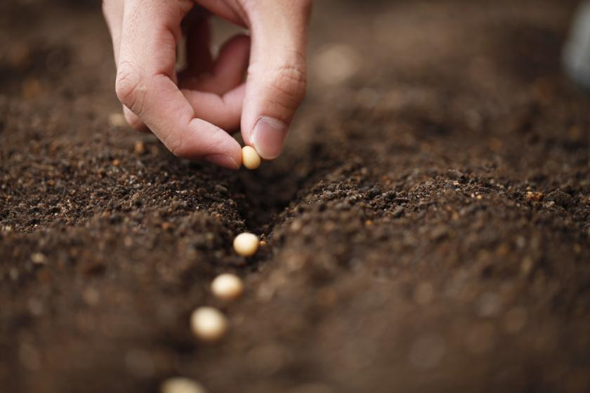 Hundreds of Americans planted those alarmingly mysterious Chinese seeds. Others ate them
