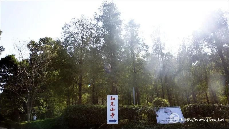 台中落羽松祕境