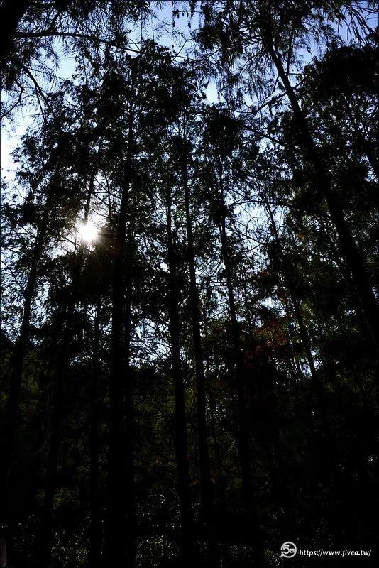 落羽松祕境