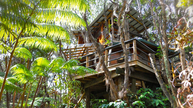 Insane Tree Houses fairytale treehouses on air b & b --- starting at $40/night!