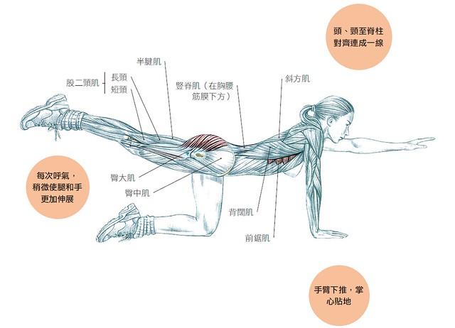 注意緊縮腹部、臀部和下背肌肉。保持姿勢停頓數秒,同時延長吸氣和呼氣。