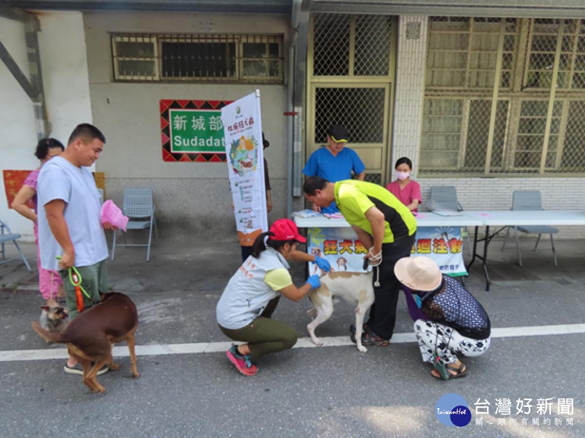 毛孩健康不能等 花蓮縣3、4月狂犬病疫苗注射場次出爐