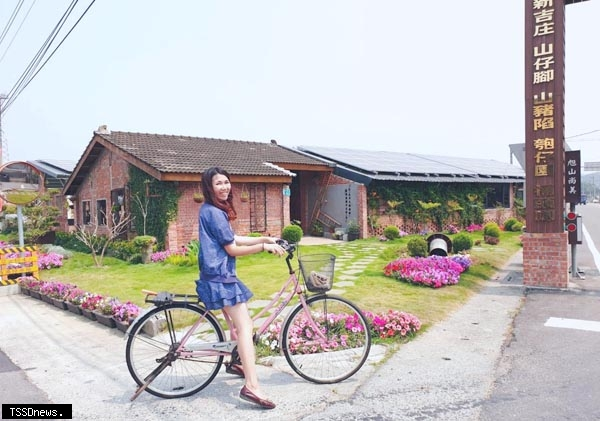 柳營向日葵花海綻放 青創夢想豬舍咖啡廳吸引親子到訪