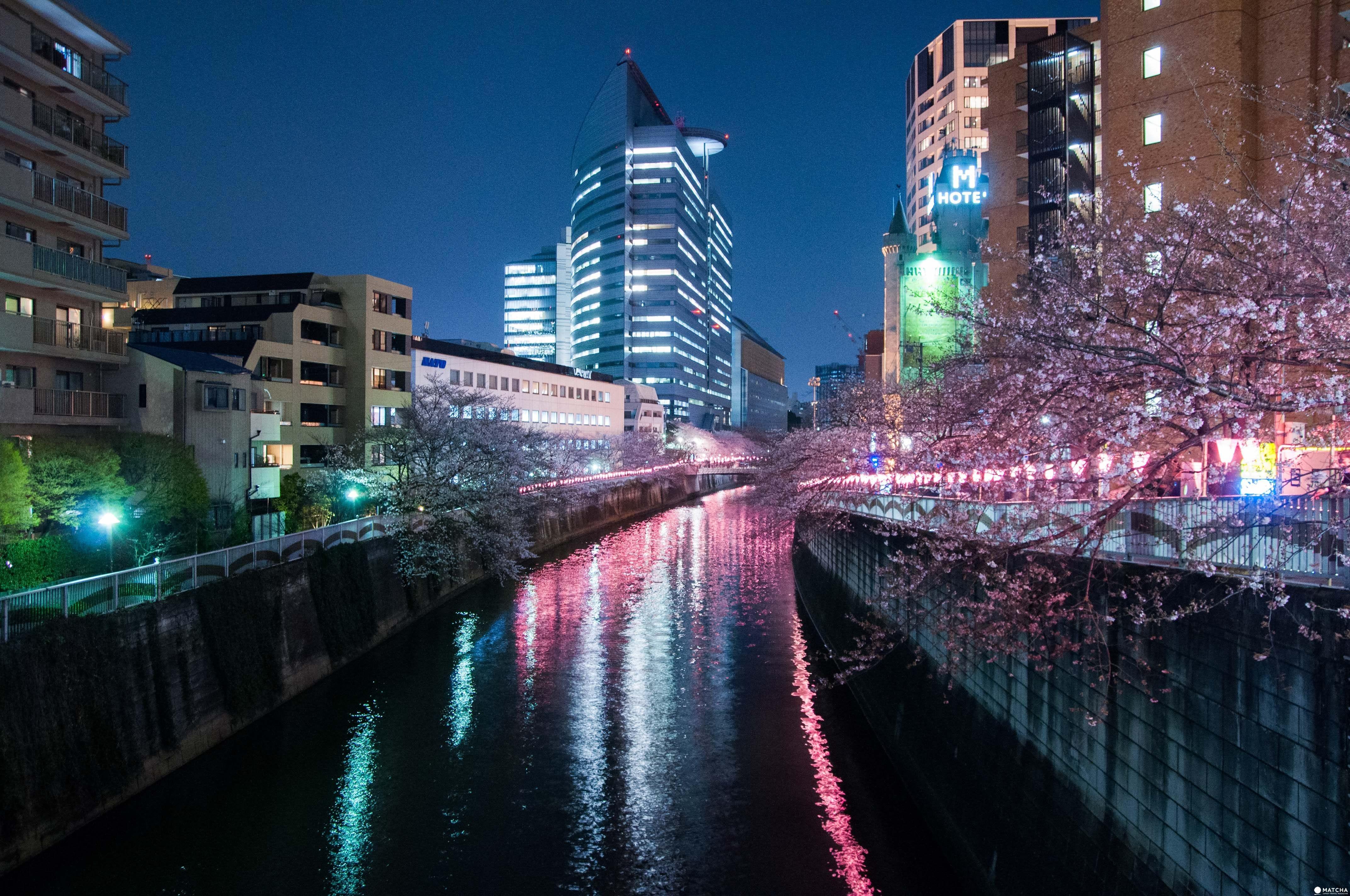 東京賞櫻紅爆熱點:目黑川