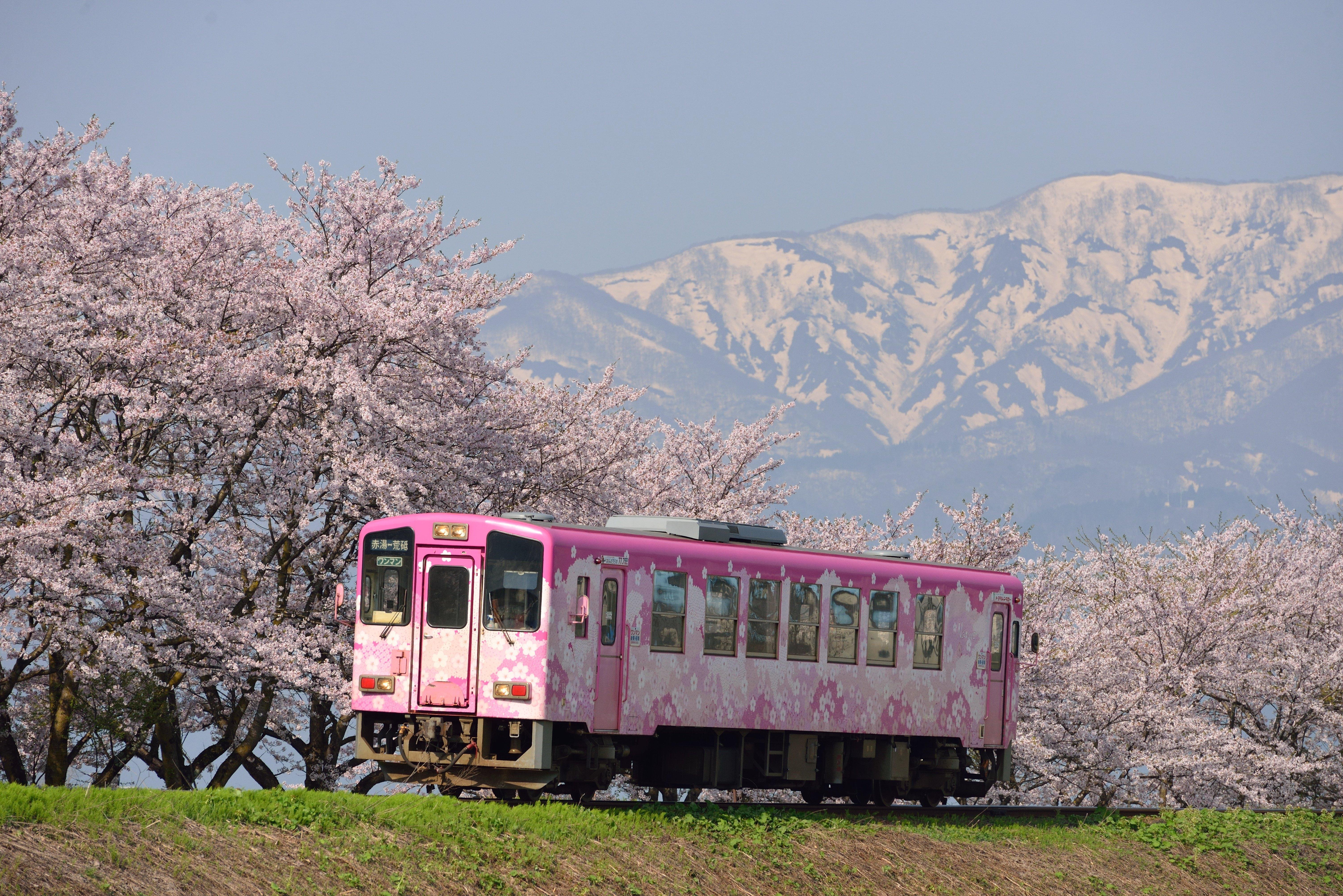 櫻花長井線