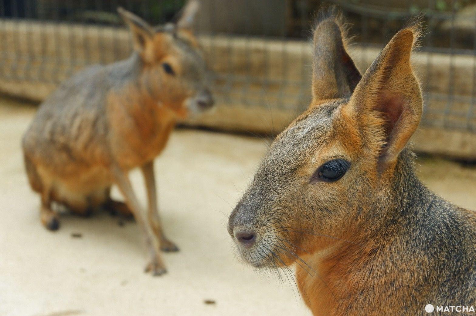 【神戶】動物自由自在,全家大小盡情享受的無障礙動物園「神戶動物王國」