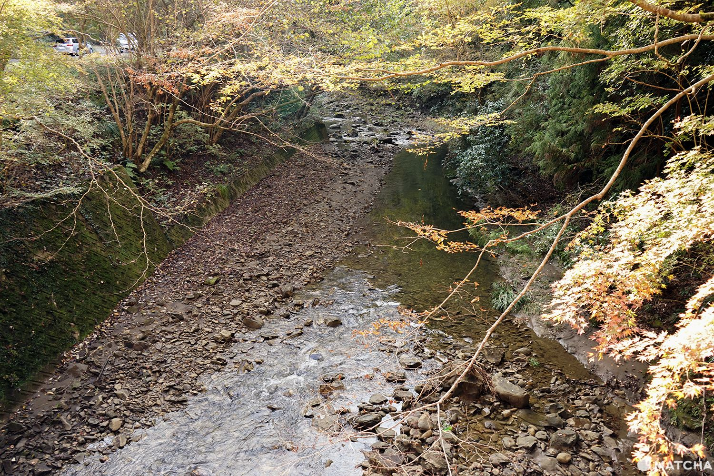 โยโรเคโคคุ Yoro Keikoku valley ใบไม้เปลี่ยนสี ชิบะ