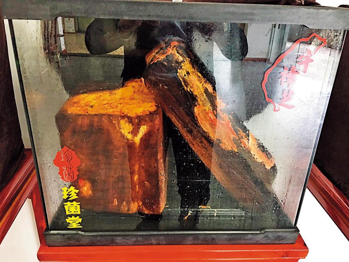珍菌堂提供圖中的椴木培植箱給會員培養牛樟芝,聲稱每週會支付700元契作培植費。(翻攝網路)