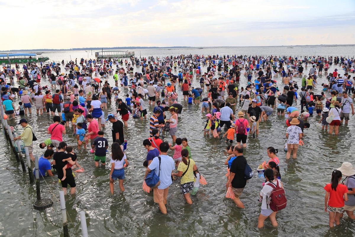 台南七股海鮮節曾創下千人參與挖蛤體驗。(台南觀光旅遊局提供)