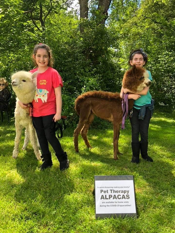 小朋友看到羊駝都非常開心,還忍不住伸出手來撫摸牠們蓬鬆的毛髮。(翻攝自My Pet Alpaca臉書)