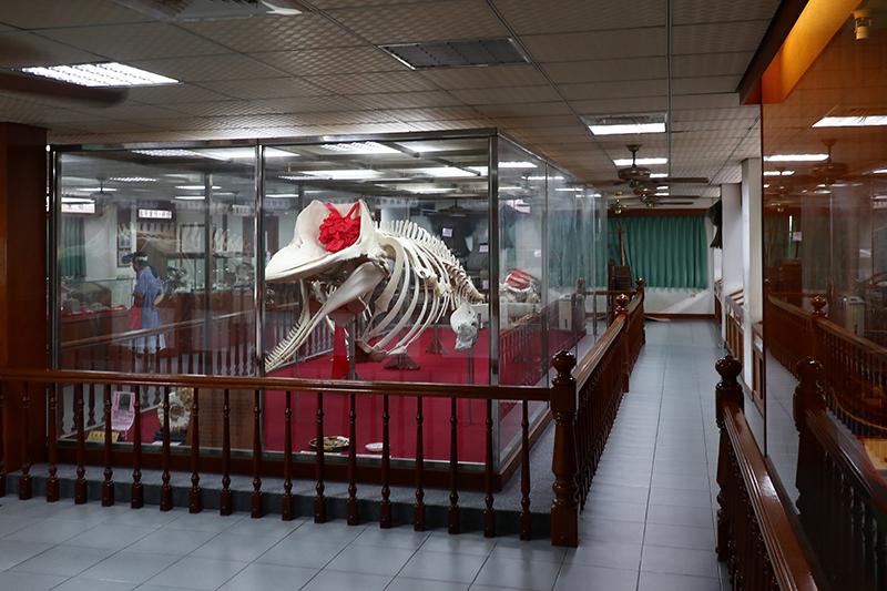 綠色隧道一旁的抹香鯨陳列館展示許多生物標本,但這頭可憐的抹香鯨又不是新車,何以被戴上一朵紅花?