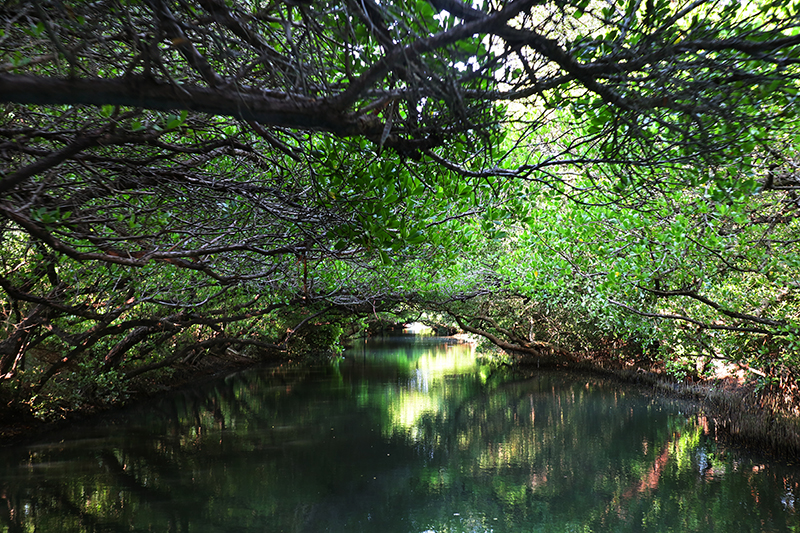 四草綠色隧道為乘船行程,景色美不勝收之餘生態亦有可觀之處。