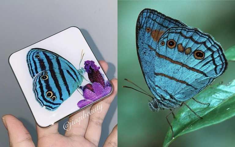 香緹卡蝶舞翩翩四色眼彩盤/2,700元 將蝴蝶美麗的身影完整呈現於外包裝上,令人過目難忘。(圖/IG@jiaqibeauty、IG@chantecaille)