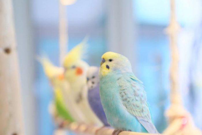小鳥咖啡廳(ことりカフェ)