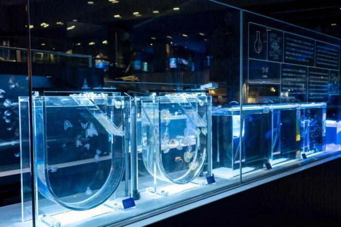 墨田水族館-Aqua base
