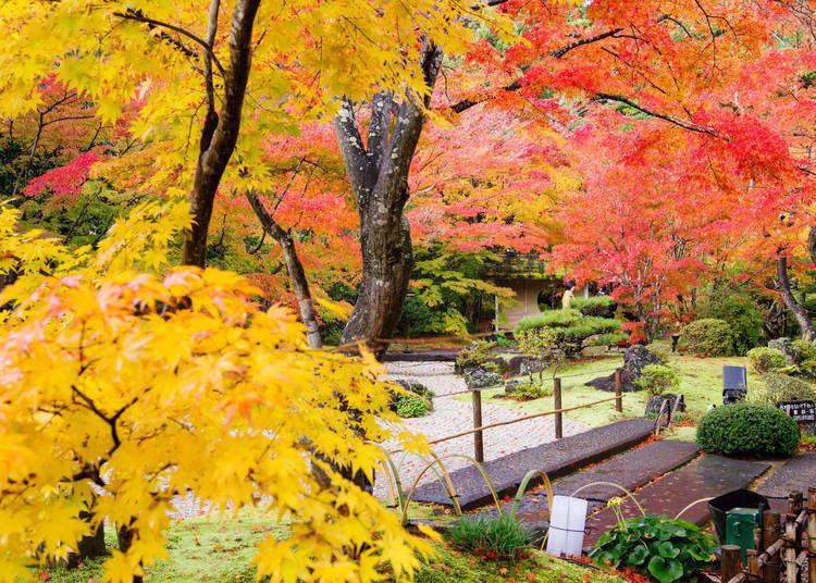 10個必去的日本宮城縣賞楓景點!最佳賞楓時間、交通資訊