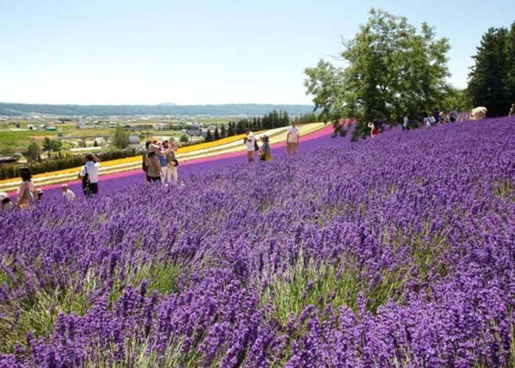 花季時很多遊客到此旅遊。