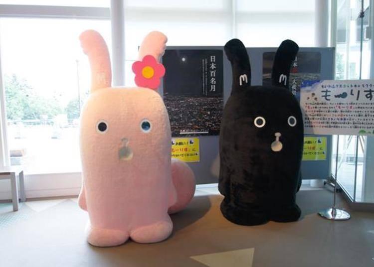 在「Moi moi之店」的旁邊,會看到藻岩山的吉祥物喔!右邊是「Morisu」,左邊是他的太太「Morisumama」。