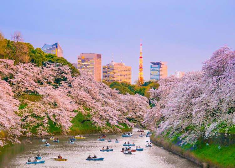 春暖花開的東京除了櫻花還有?3月、4月、5月東京春遊行程、景點推薦