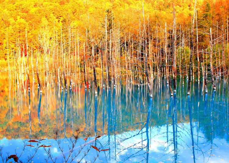 秋季的景色