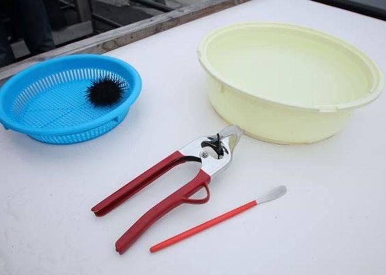 雖然形狀和鉗子相同,但這是剖海膽殼專用的器具。面前這一根紅色器具是剖開後從殼中取出新鮮海膽肉的刮棒。右邊白色的水盆是用來裝鹽水清洗海膽肉的。