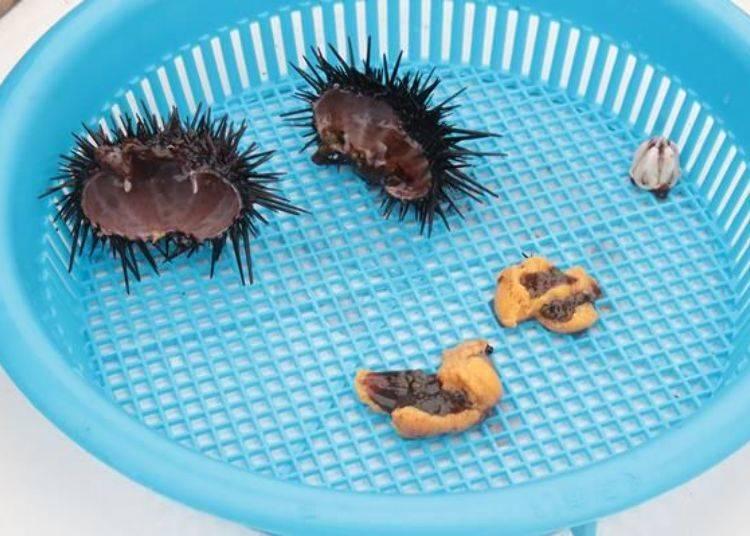 這是取出來的海膽肉。殼和嘴巴(右上方白色的部份)都是要丟掉的。