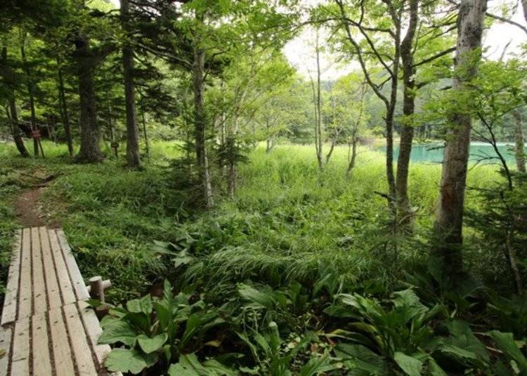 ▲雖然湖四周的散策道都是有整理過的,但這條道比較窄小,腳邊偶爾還會有樹枝障礙物,要小心前進。