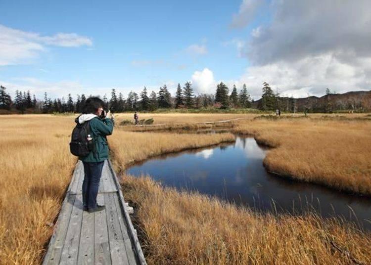 在往神仙沼的散步步道途中,有一大片濕原風景,遠遠的望去此景色就變成一幅畫。