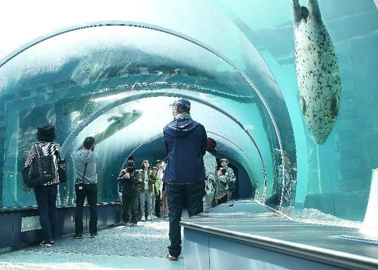 前方為海豹的水槽,後面則是北極熊的水槽