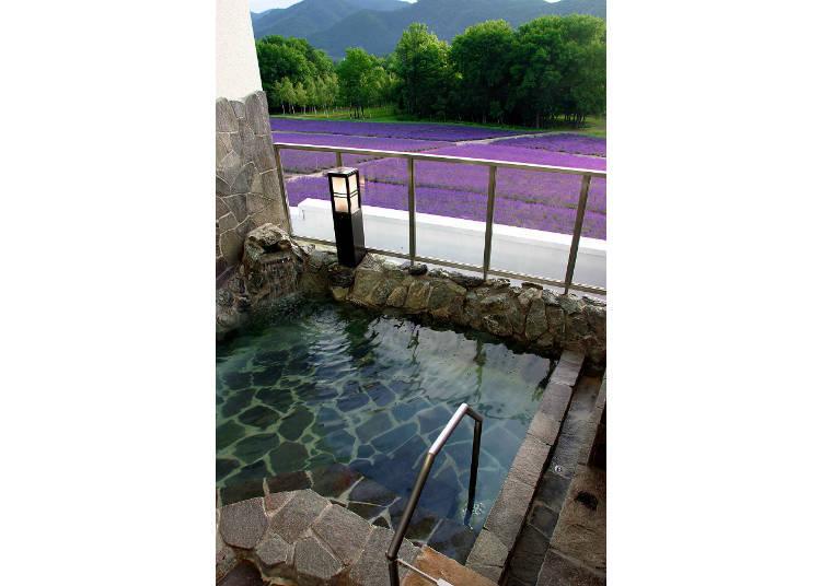 泡湯池前面的柵欄後方就是「薰衣草花海」!