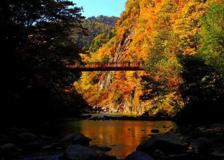 ▲橫跨豐平川溪谷上的紅色吊橋「二見吊橋」(照片提供:定山溪觀光協會)