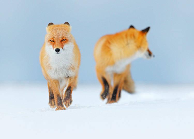 想賞雪的話就到北海道吧