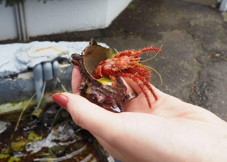 一進門後有擺放幾個水槽,是可以直接伸手觸碰海洋生物的,記得要在不傷害生物的前提之下,小心呵護地與這些生物們進行親密接觸唷!