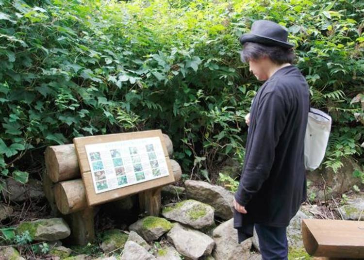 途中有介紹藻岩山動植物的標示牌,還有設置休息的長椅。