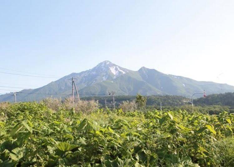 從「野塚公園」眺望的利尻山,跟在姬沼比較起來,左側線條較多起伏,而右側看起來則像是跟山頂分離的。