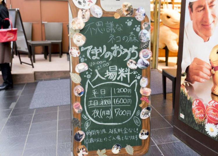 ▲大樓的1樓有放置「手毬的家(てまりのおうち)」的招牌。招牌的邊框貼滿了貓咪們的照片,讓人印象非常深刻。