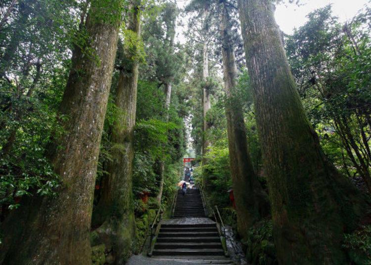 ▲90階的正參道石階被眾多巨大杉木包圍,氣氛莊重