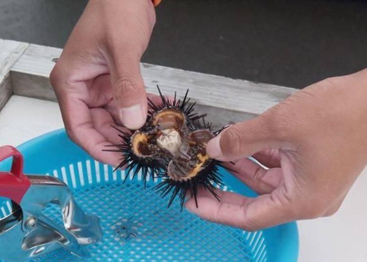 這是剖開後的海膽。接下來就要來取出海膽肉。
