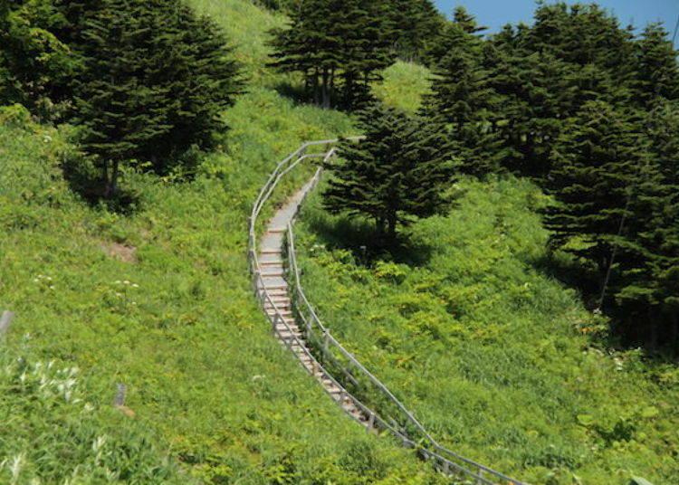 配合開花時期在5月下旬~6月上旬才有開放的散步步道(照片提供:禮文花卉導覽團組)。