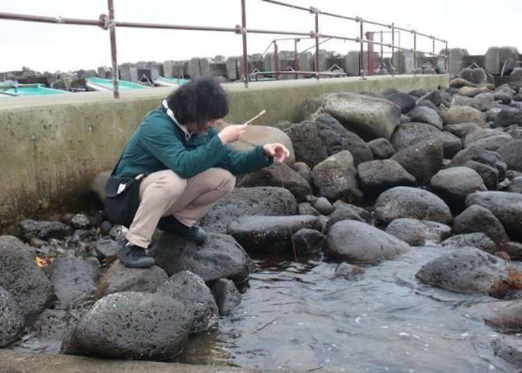 「釣螃蟹體驗」(免費)。可以借釣螃蟹專用的用具在海邊釣小螃蟹(不能吃)遊玩。很可惜,這天沒有釣到‧‧‧
