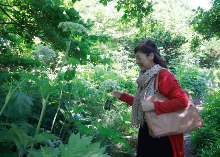 ▲可自由進出的花木園內種植了許多比人還高的白色開花植物