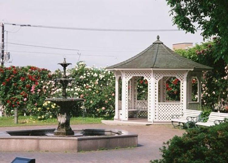 ▲可坐在西洋庭園中的長凳上,優雅的觀賞盛開的玫瑰花園。