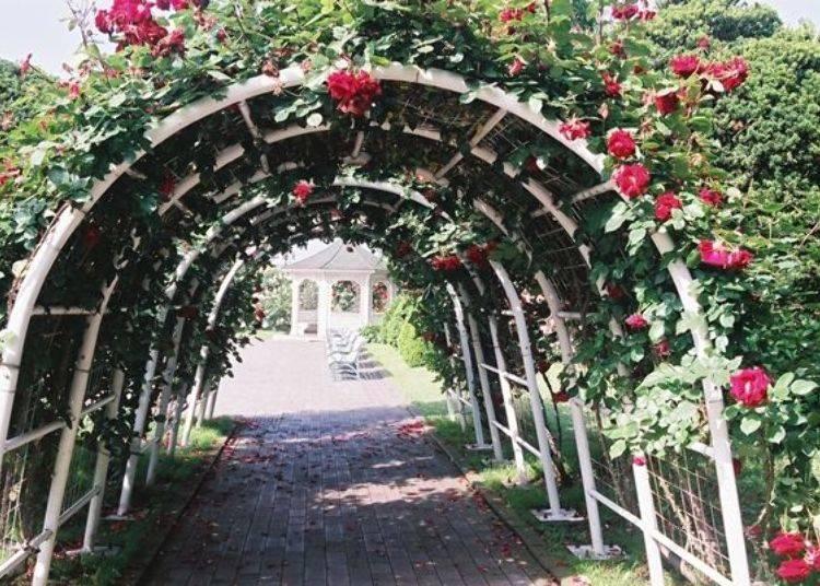 ▲穿過玫瑰隧道往中庭前進。