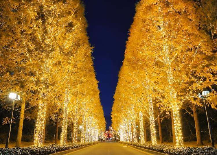 【2019-2020最新】大阪、京都、神戶等關西地區冬季燈飾璀璨登場!推薦景點、活動5選