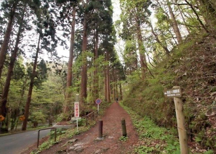 ▲除了車輛可通行的函館山觀光道路外,若想健行的旅客也可選擇行人專用的登山步道前往喔。