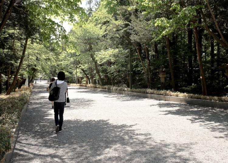 被樹木円繞的表參道。據說參道中間是神明所行走的地方因此要走在兩側。