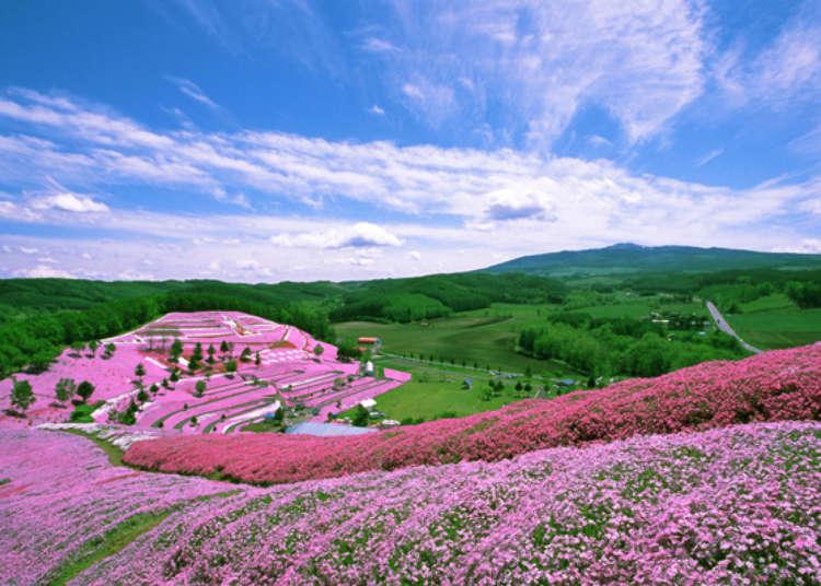 北海道‧芝櫻名勝景點「東藻琴芝櫻公園」賞花時機及活動情報