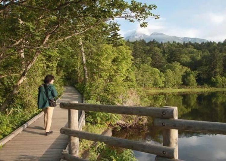 圍繞著沼澤有約1公里的步道,僅需20分鐘便可以繞行一圈。